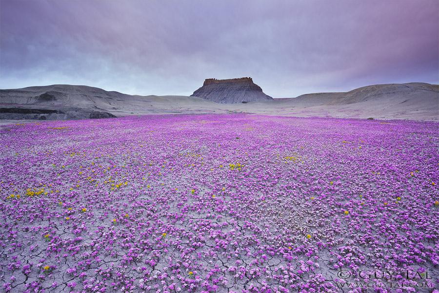 Guy Tal photographie fleurs désert Utah