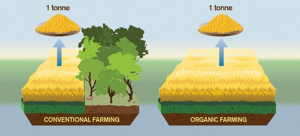 La vérité qui dérange sur l'agriculture biologique et son impact environnemental 1