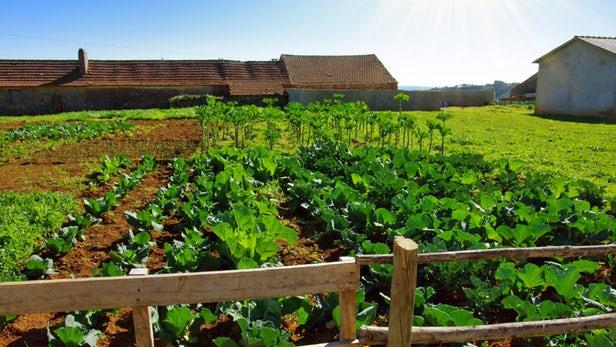 La vérité qui dérange sur l'agriculture biologique et son impact environnemental