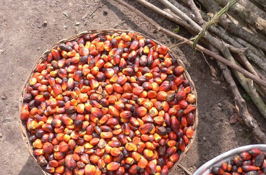 Le boycottage de l'huile de palme est-il vraiment la meilleure chose à faire ?