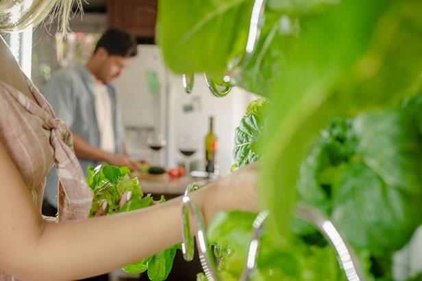 iHarvest - Un jardin vertical pour votre appartement 1