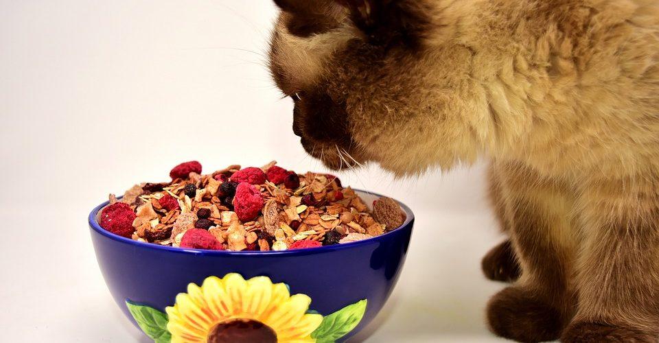 Les aliments pour chats faits maison peuvent être dangereux pour votre animal