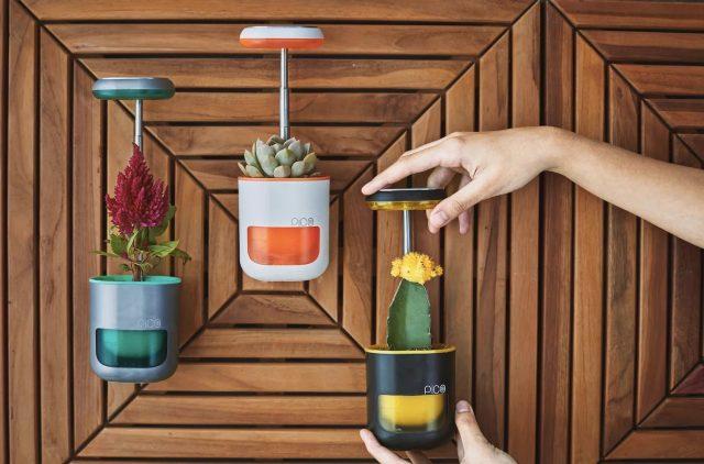 Pico – Un petit jardin qui tient dans la paume de votre main 1