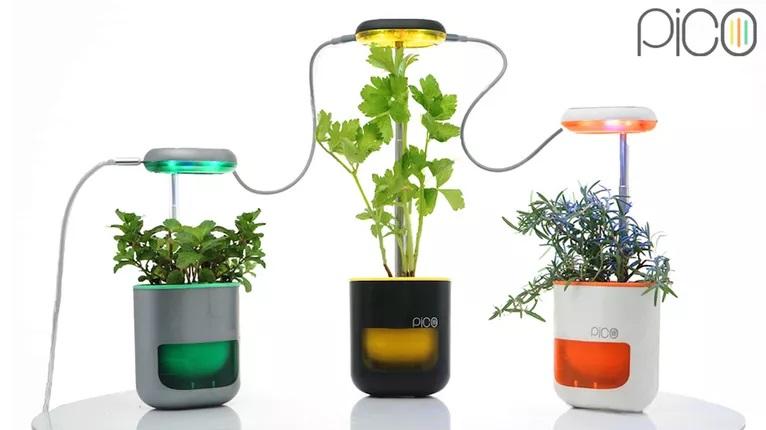 Pico – Un petit jardin qui tient dans la paume de votre main