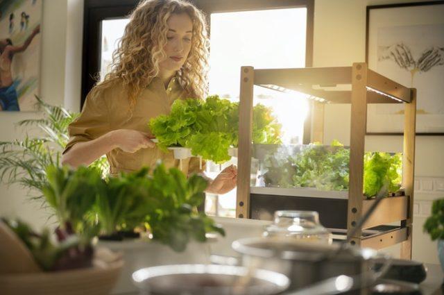 Click & Grow installe un potager sur le plan de travail de votre cuisine 1