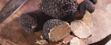 Burwell Farms possède le verger à truffes le plus productif du monde