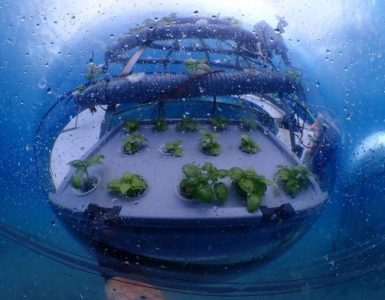Nemo's Garden première ferme sous-marine au monde